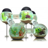 Аквариум: лабиринт для рыбки