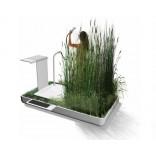 Мини эко-система в вашей ванной
